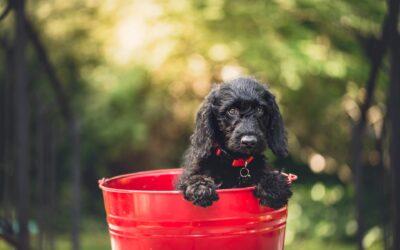 Hundefoder fra Essential Foods er helt unikt